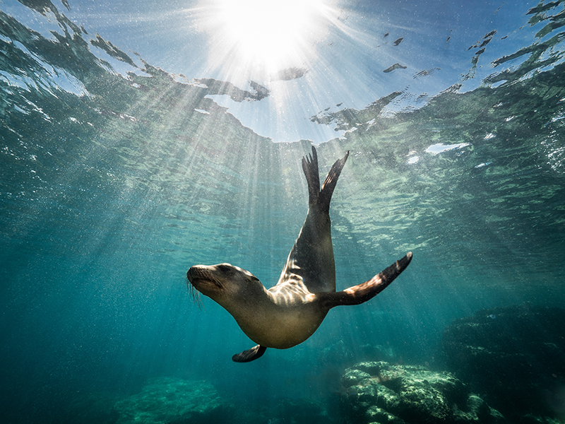 Underwater photo of a seal