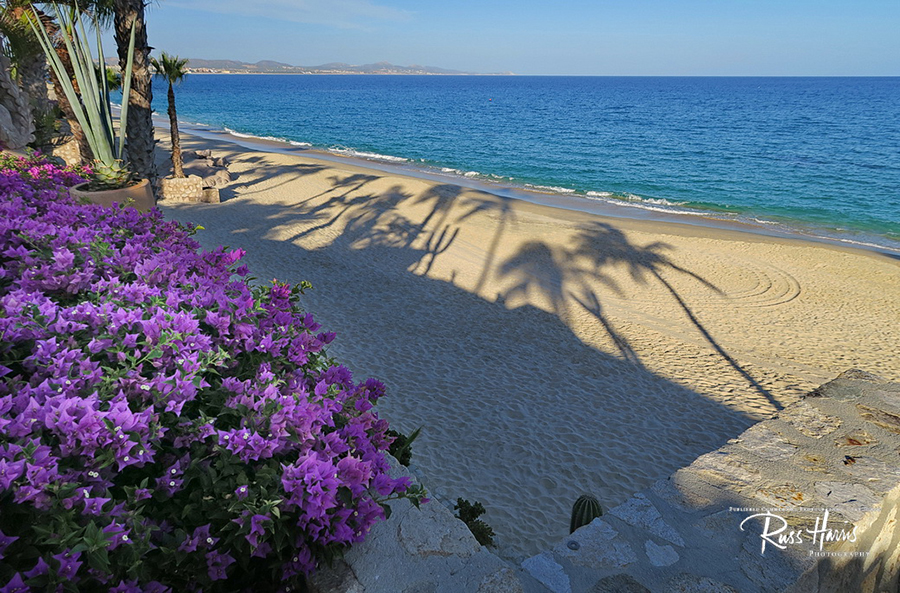 Open sandy beach with pink flowers on the left