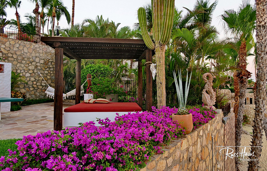 Outdoor patio with tall cactus's